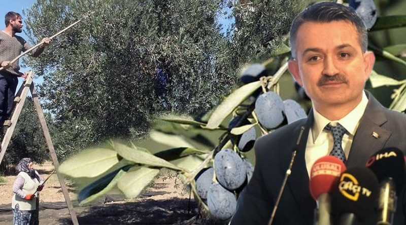 Bakan Pakdemirli'den zeytin üreticisine müjde